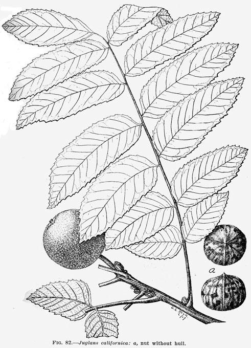 walnut ridge black singles Walnut creek california singles charts  white black or african american  asian other race compare: san jose-san f compare: california acalanes.